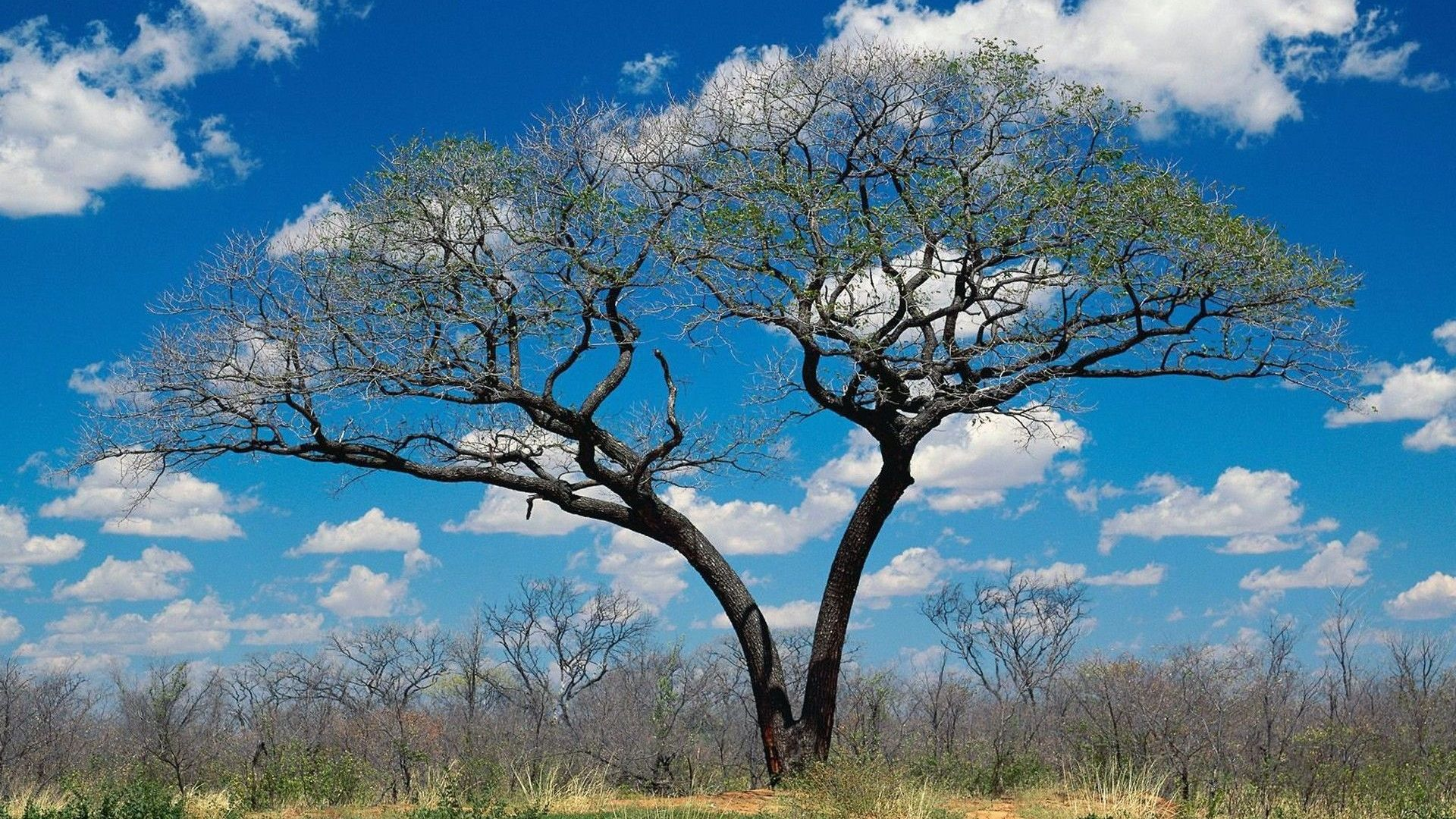 Botswana Wallpapers