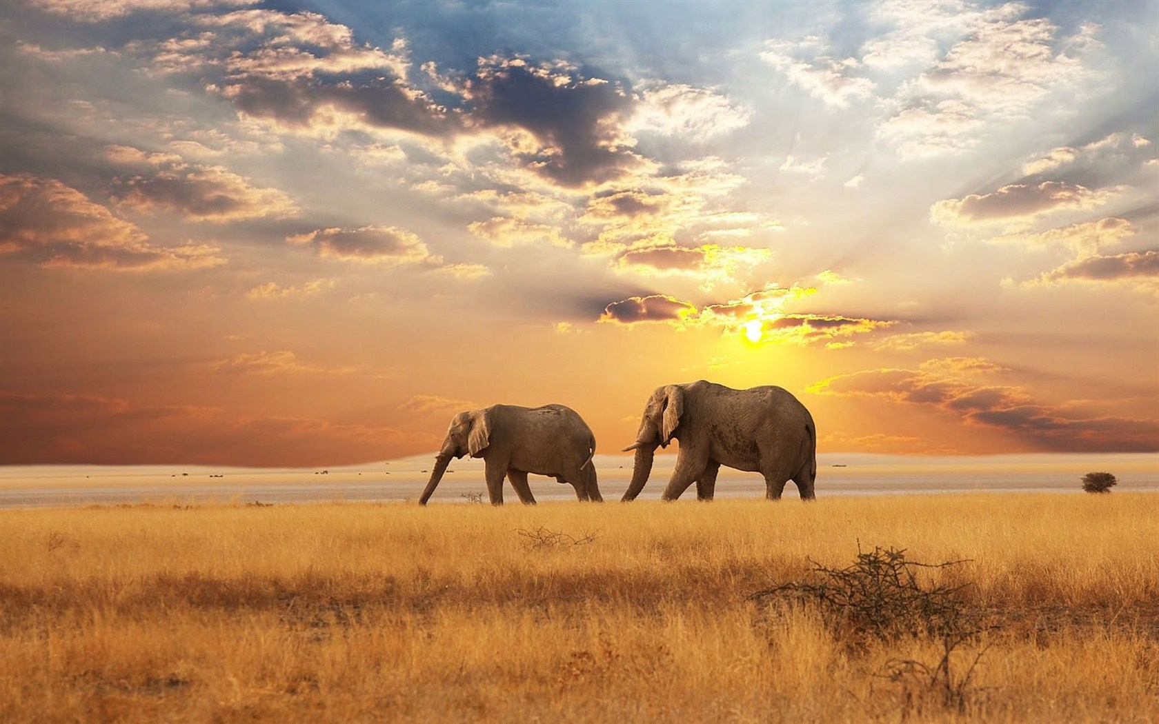 Elephant Wallpapers