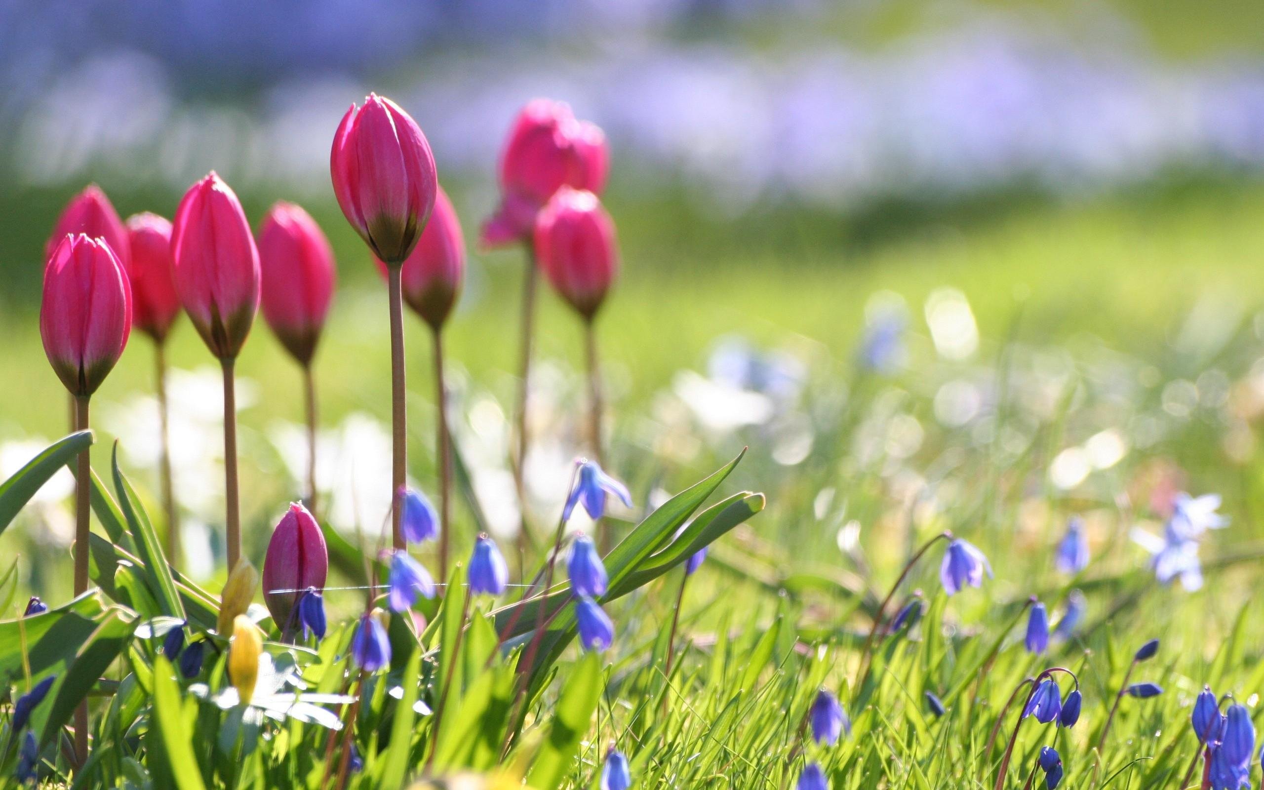 Flowers Wallpapers