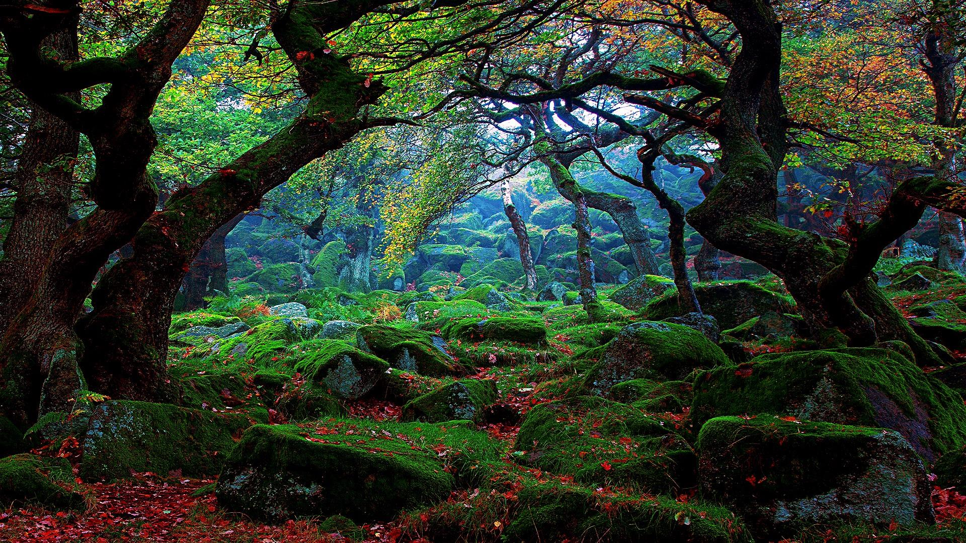 Forest Wallpapers Wallpapers All Superior Forest Wallpapers Backgrounds Wallpapersplanet Net