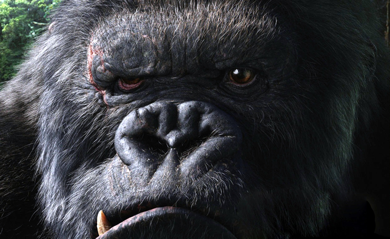 Gorilla Wallpapers
