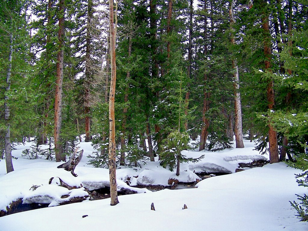 Great Basin National Park Wallpapers