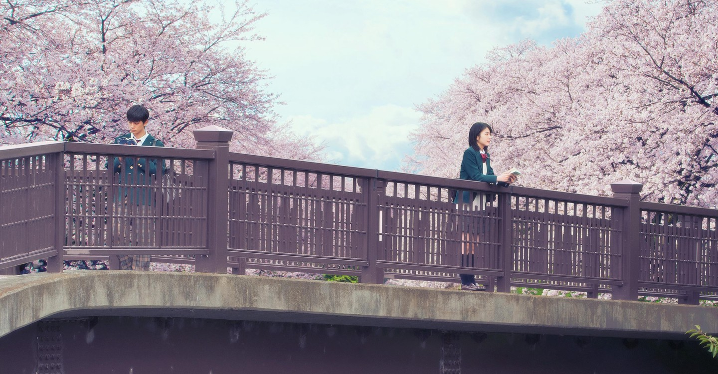 I Want To Eat Your Pancreas Wallpapers