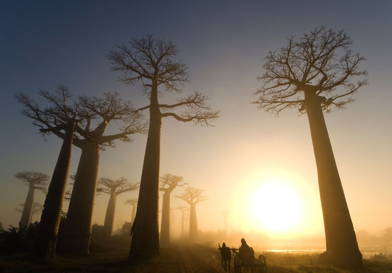 Madagascar Country Wallpapers