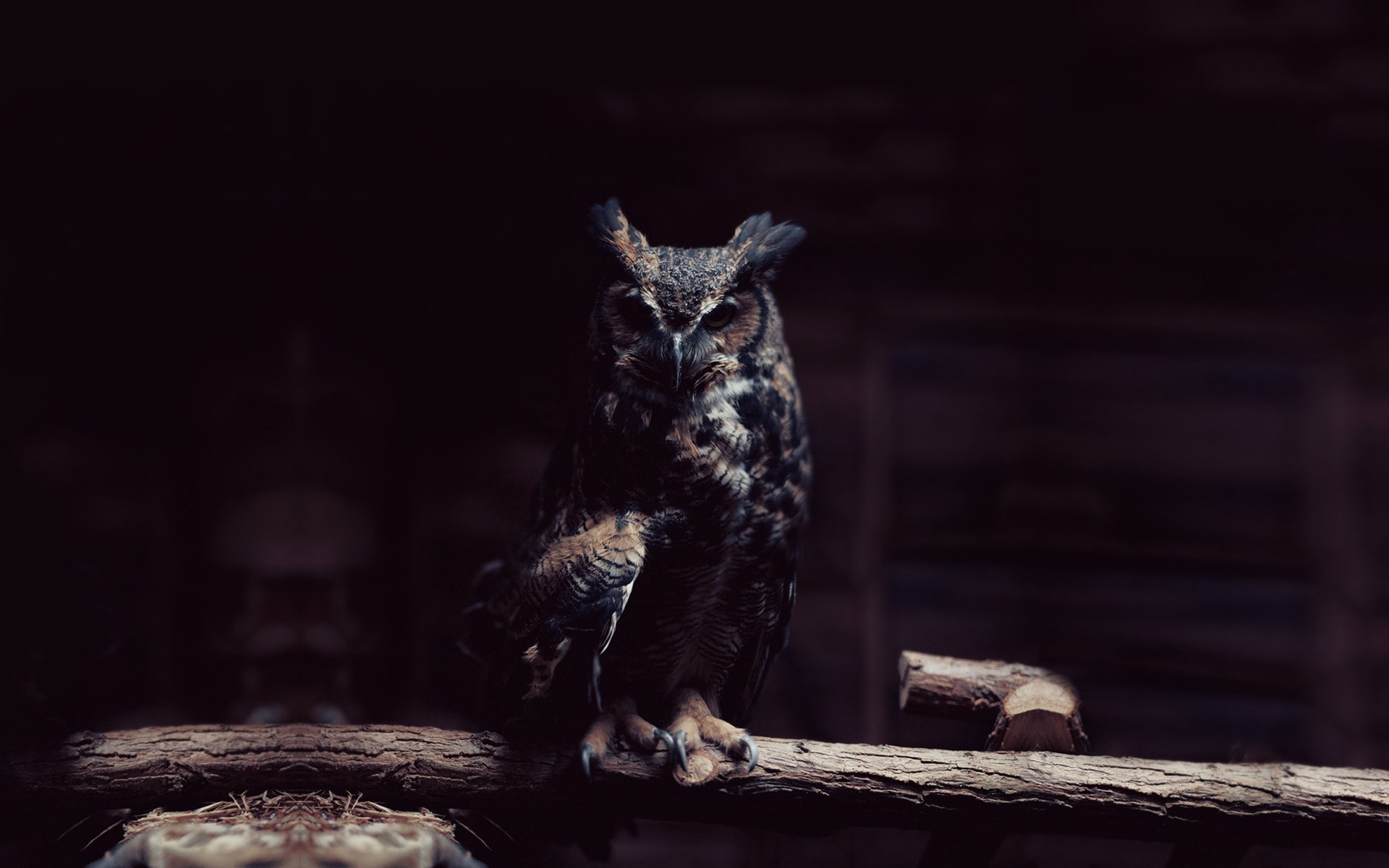 Owl Wallpapers