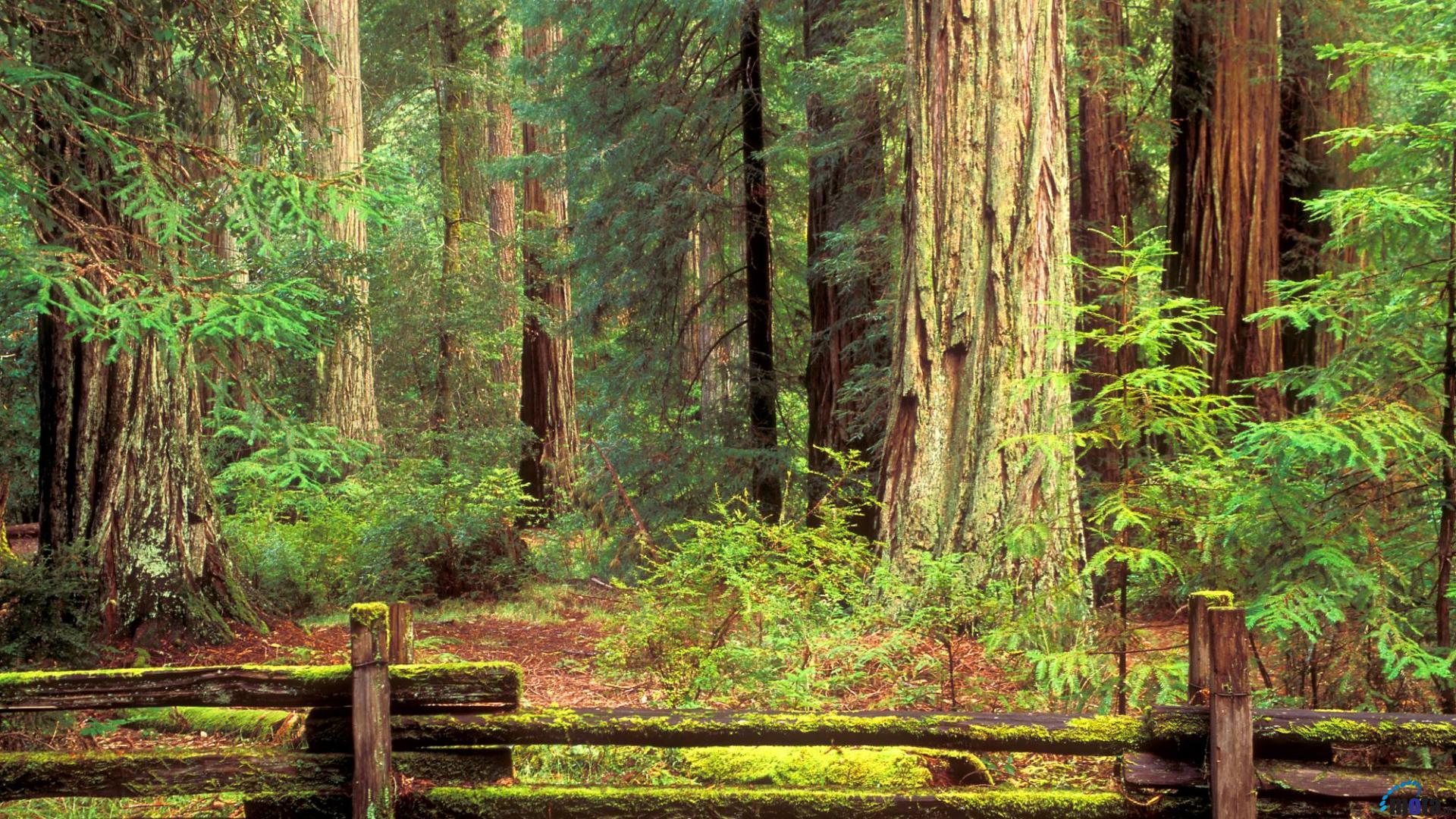 Redwood National And State Parks Wallpapers