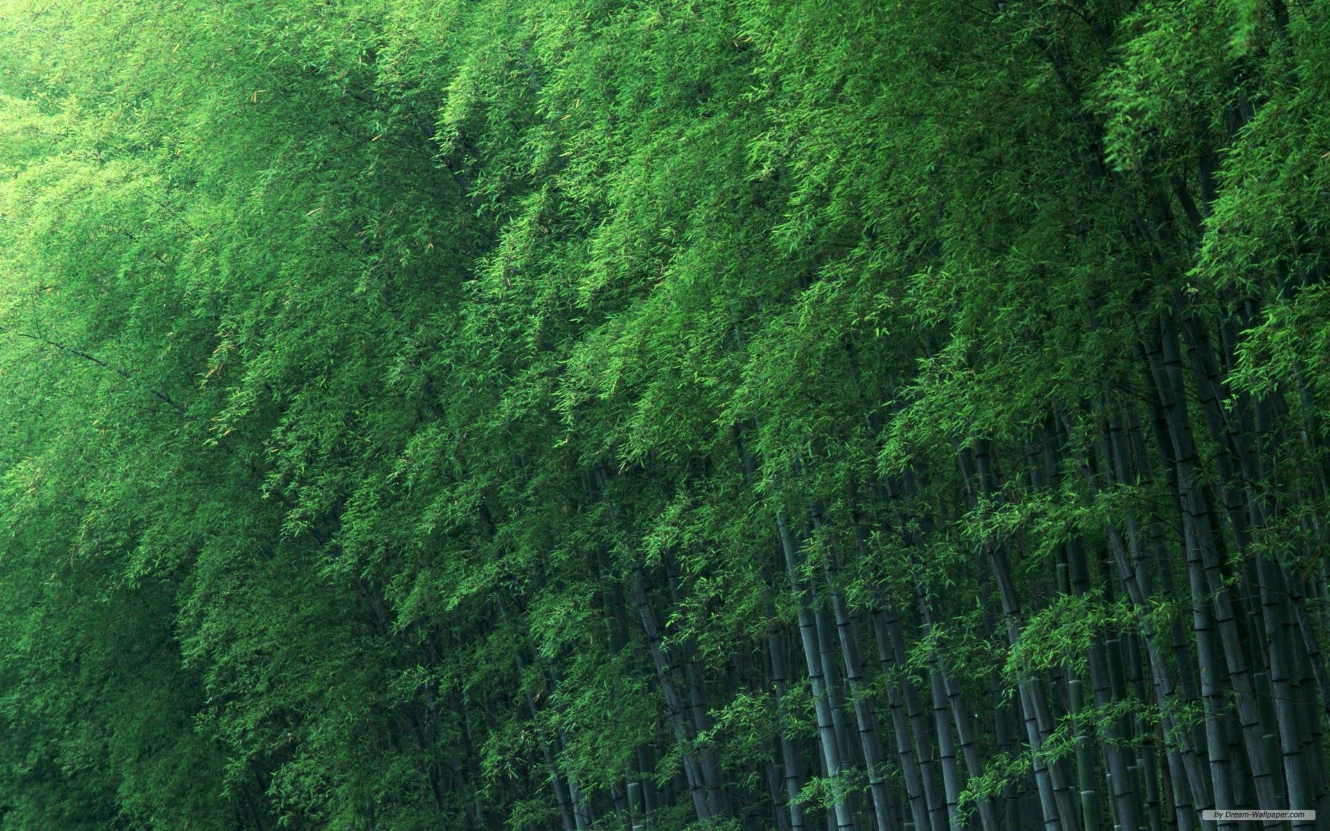Sagano Bamboo Forest Wallpapers