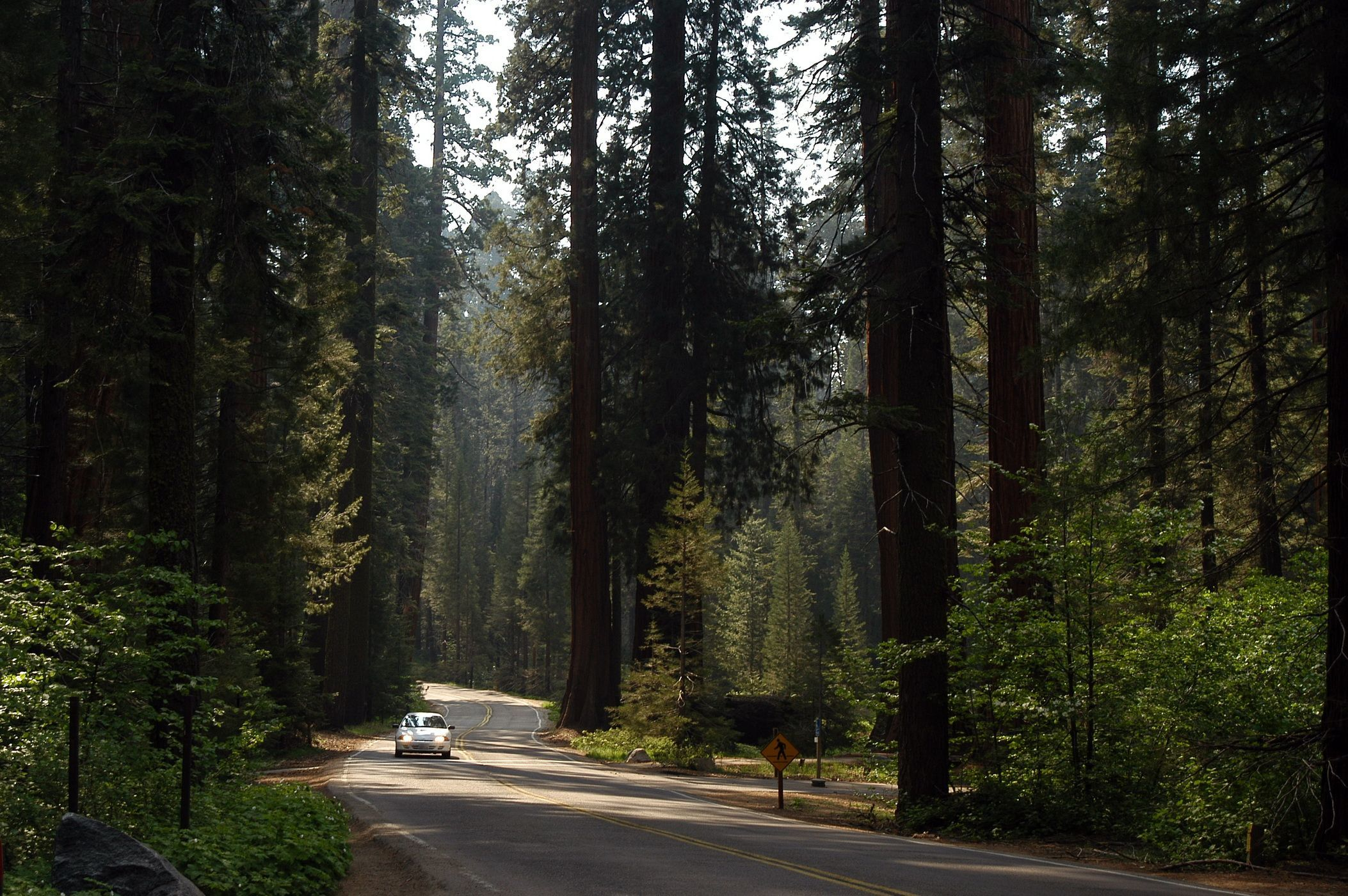 Sequoia National Park Wallpapers