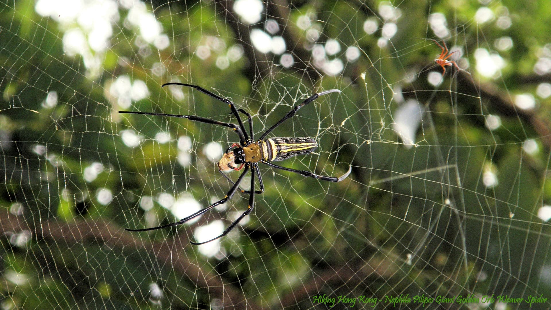 Spider Wallpapers