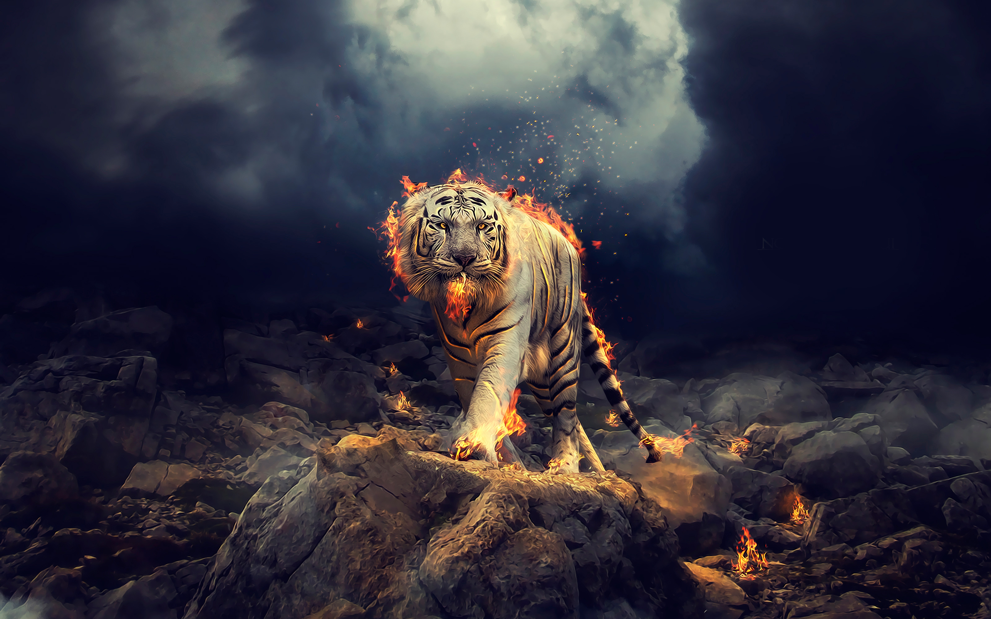 Tiger Wallpapers
