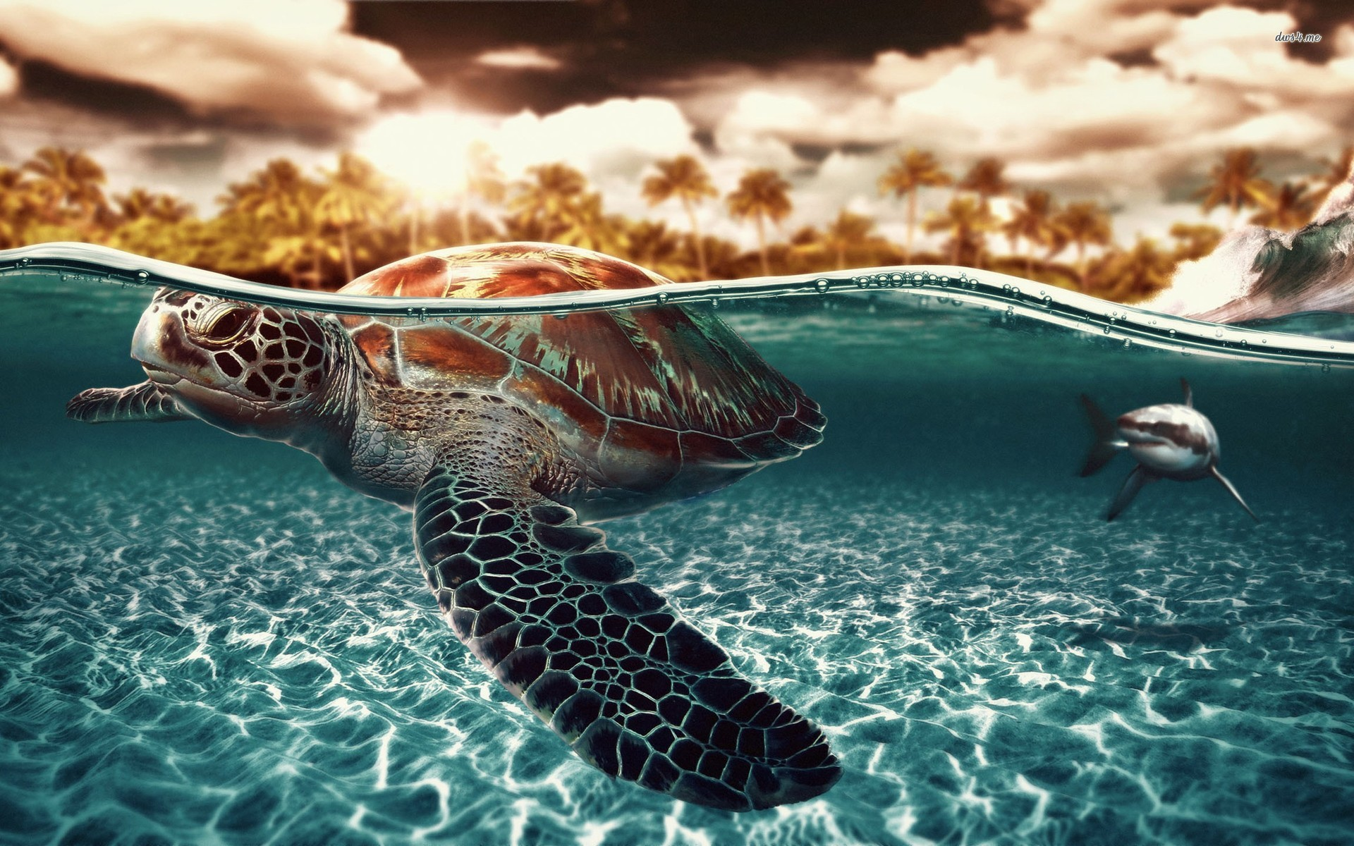 Turtle Wallpapers